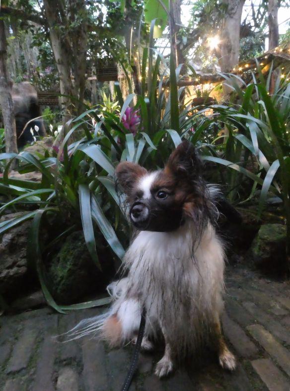 107. orchideeenhoeve